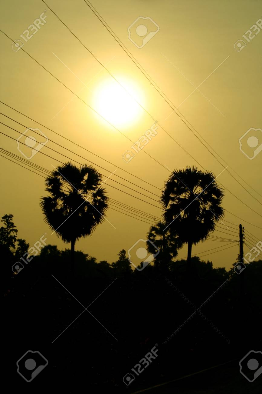 Atmosphere the morning of rice fields in Thailand. Stock Photo - 8055654