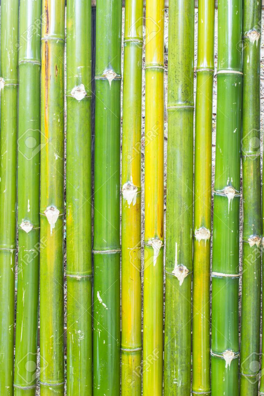 Bambou Pour Cloture Jardin green bamboo fence background