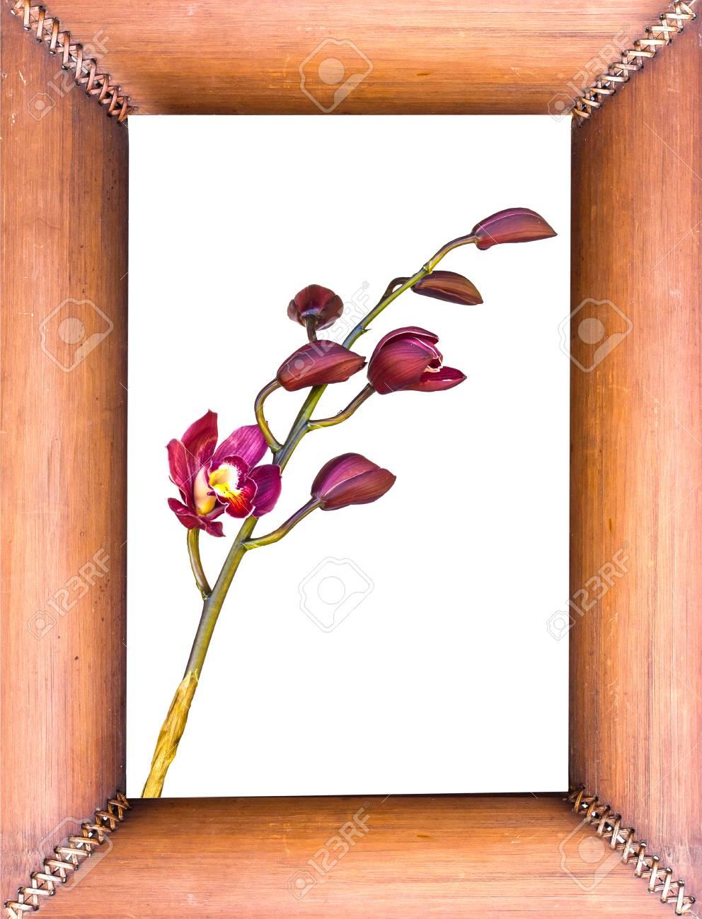 Schöne Purpurrote Blume Cymbidium Orchidee In Bambus-Rahmen ...