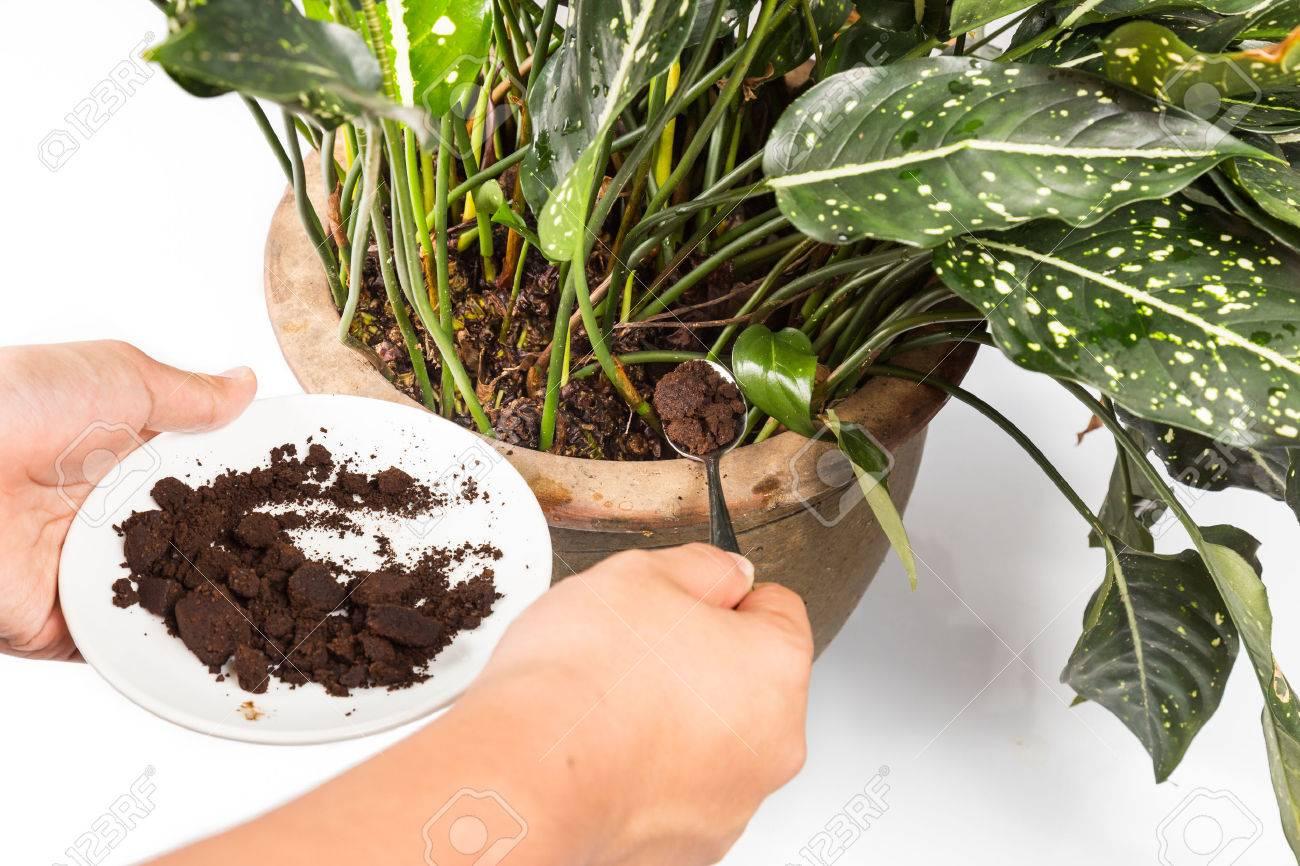 かす 肥料 コーヒー