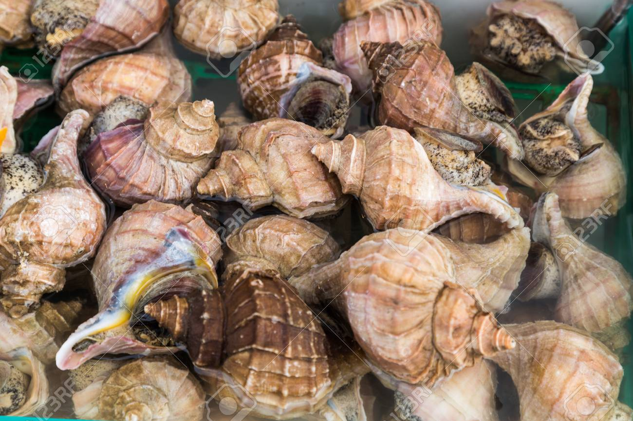 Edible sea snails seafood at Japanese market