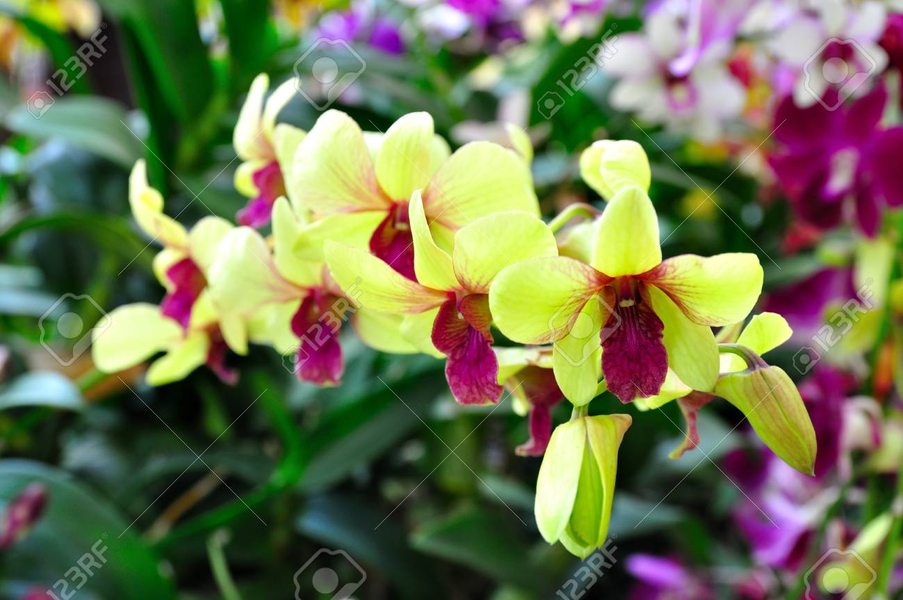 Yellow orchid Stock Photo - 9769712