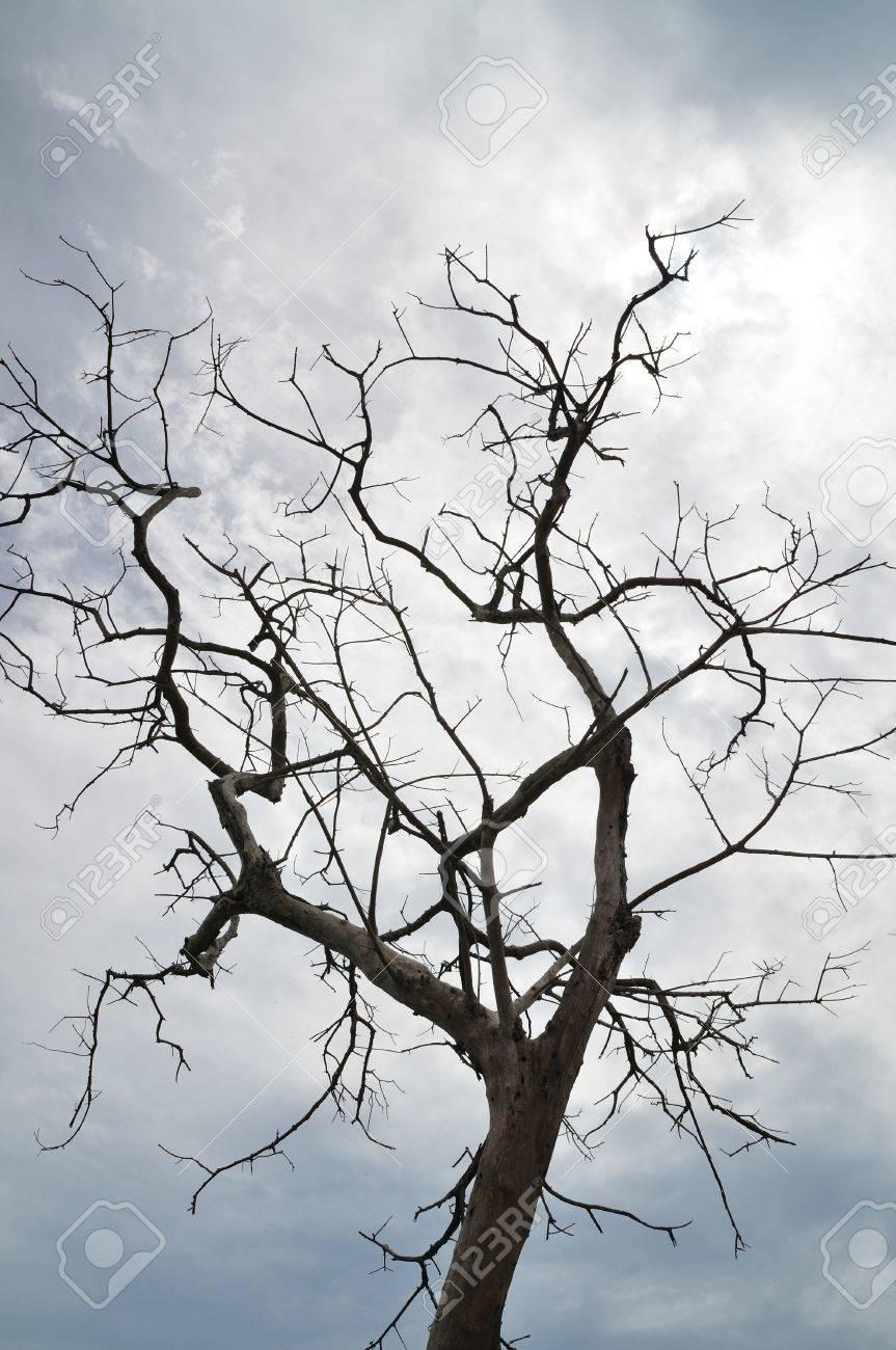 Dead tree Stock Photo - 9560677