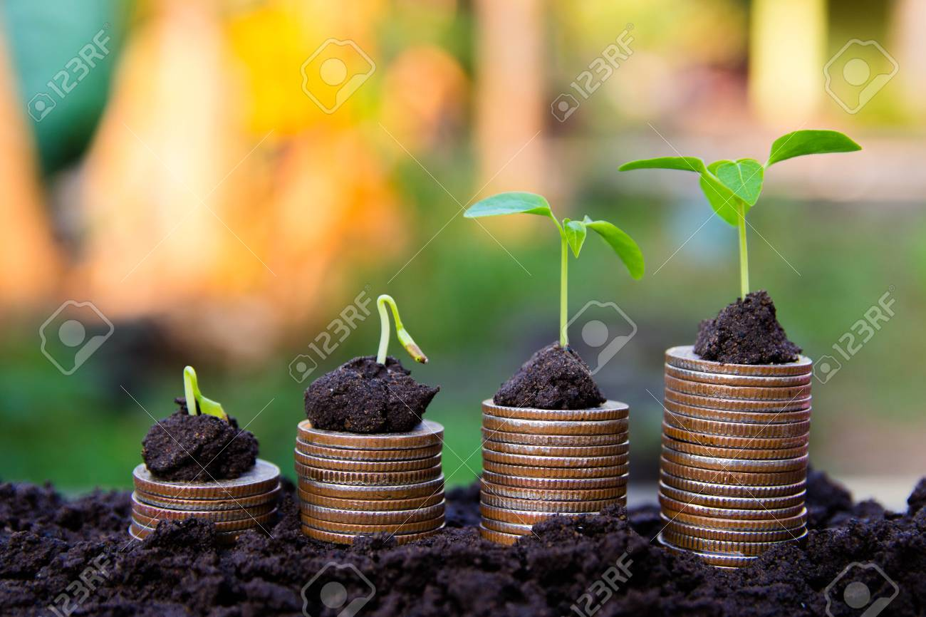 background Growing Money Plant On Coins business Finance And Investment Concep - 120311729