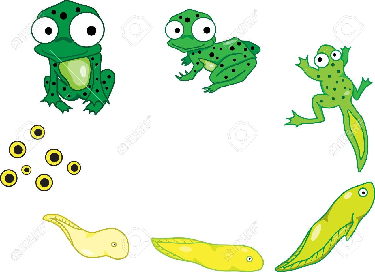 76 frog life cycle stock illustrations cliparts and royalty free
