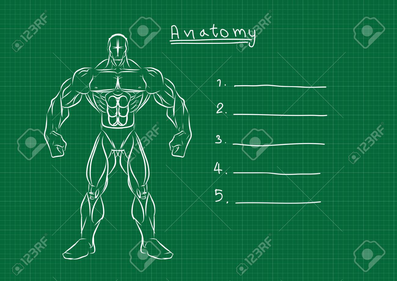 Male Anatomy Front Reference