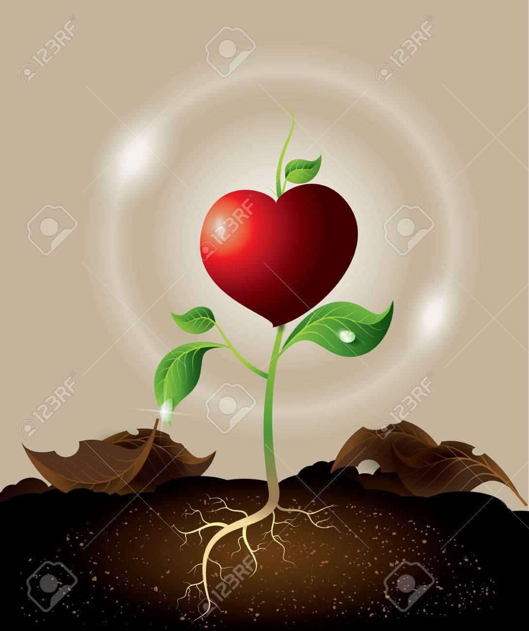 Que pasa cuando un corazon crece