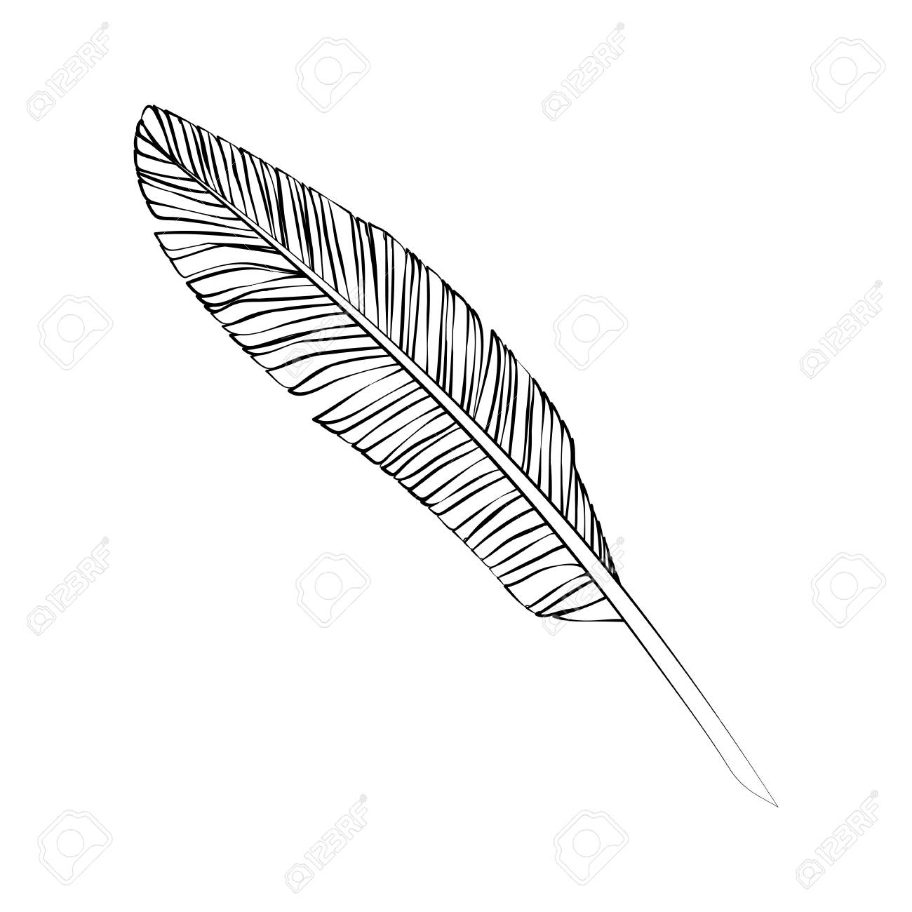 Black Outline Vector Feather On White Background Royalty Free Cliparts Vectors And Stock Illustration Image 55596216 In this tutorial in our series on making selections in photoshop, we'll look at a great way to feather, or soften, selection outlines using photoshop's quick mask mode! black outline vector feather on white background