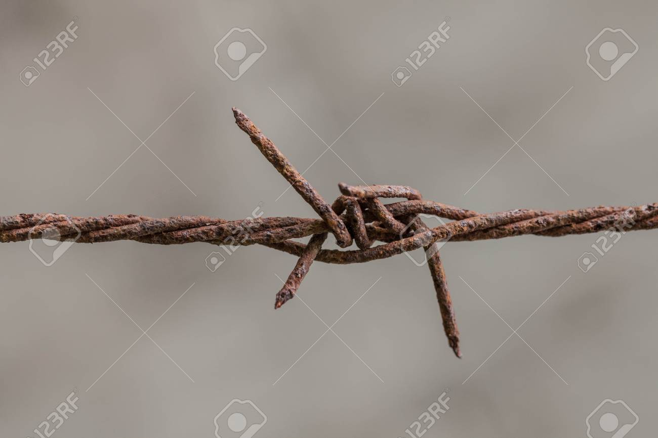 Barbed wire rack on the wall to prevent it  In a restricted area Stock Photo - 14286955