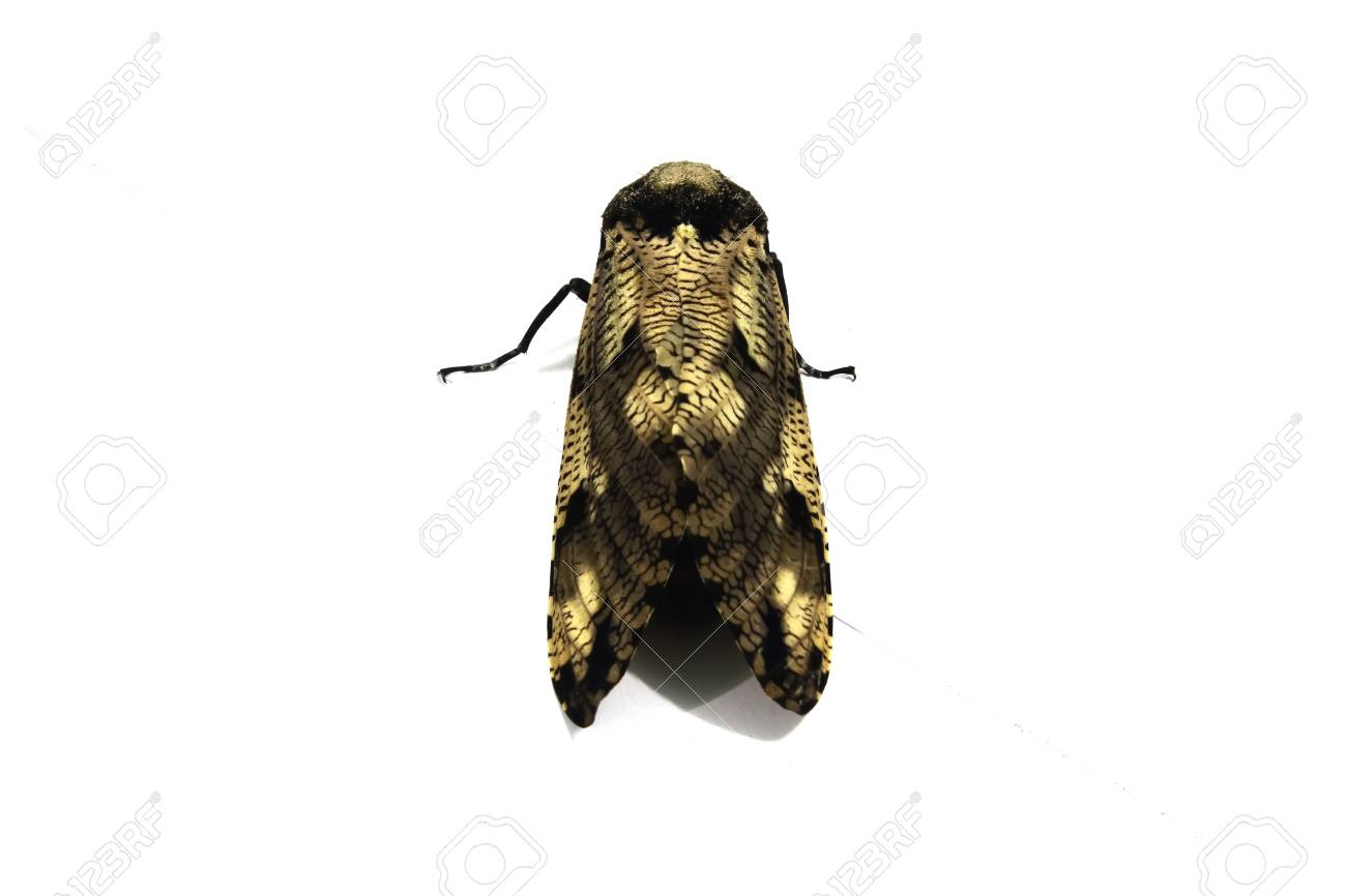 Moth Stock Photo - 23695047