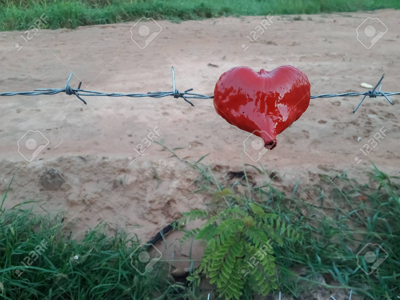 Heart Hangs On A Barbed Wire Fence. Stock Photo, Picture And Royalty ...