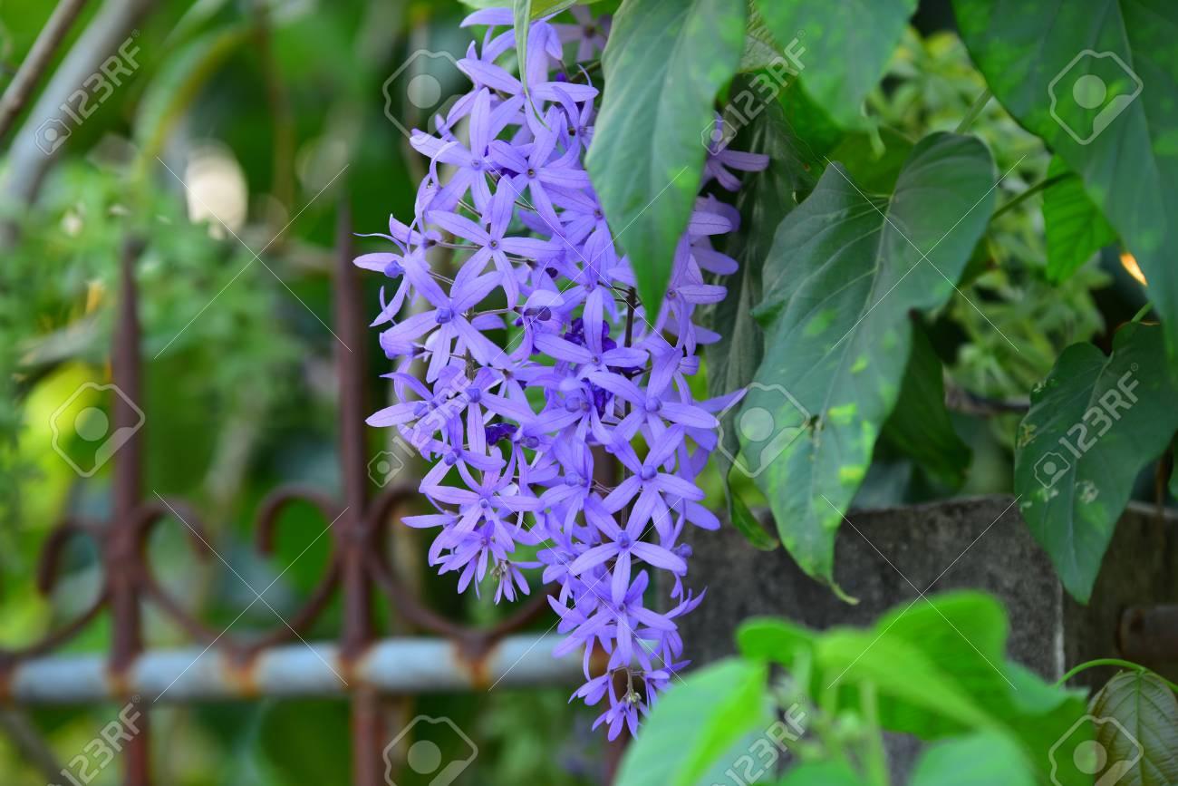 Bouquet of blue flower purplea group of purple bouquet flower bouquet of blue flower purplea group of purple bouquet flower with green leaves izmirmasajfo