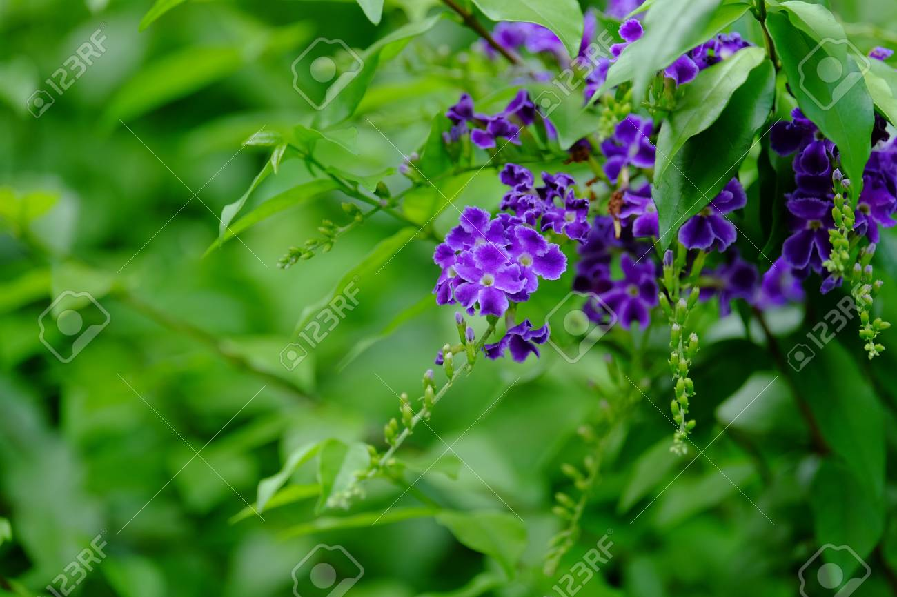 Bouquet Of Purple Flowers With Yellow And Black Butterfly In