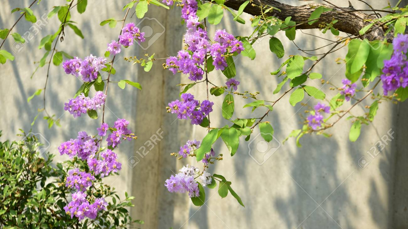 Small Purple Flowers With A Beautiful Bush Violet Flower