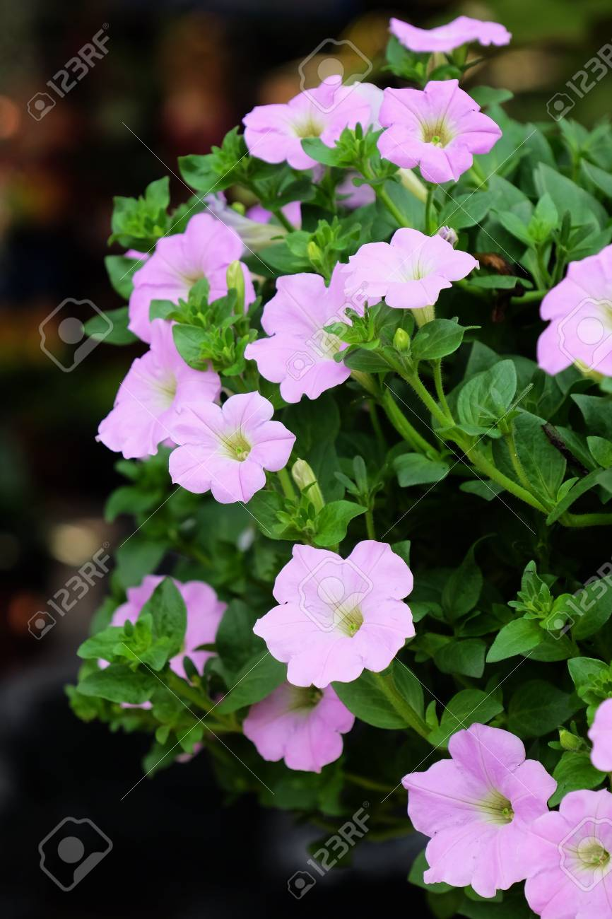 Blooming Flowers And Spring Summeruquet Flowers Background