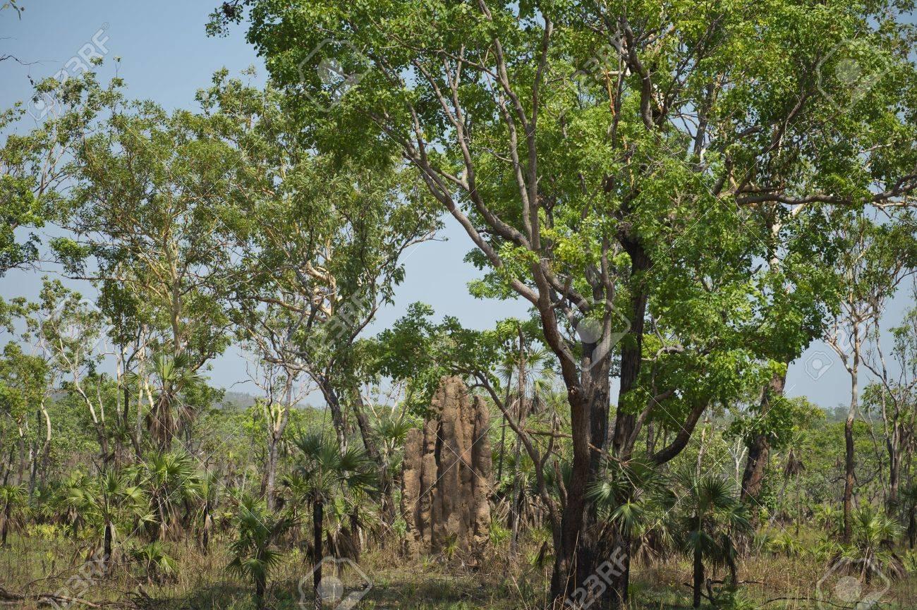 Termite Mound in the Australian bush at Litchfield National Park. - 16210508