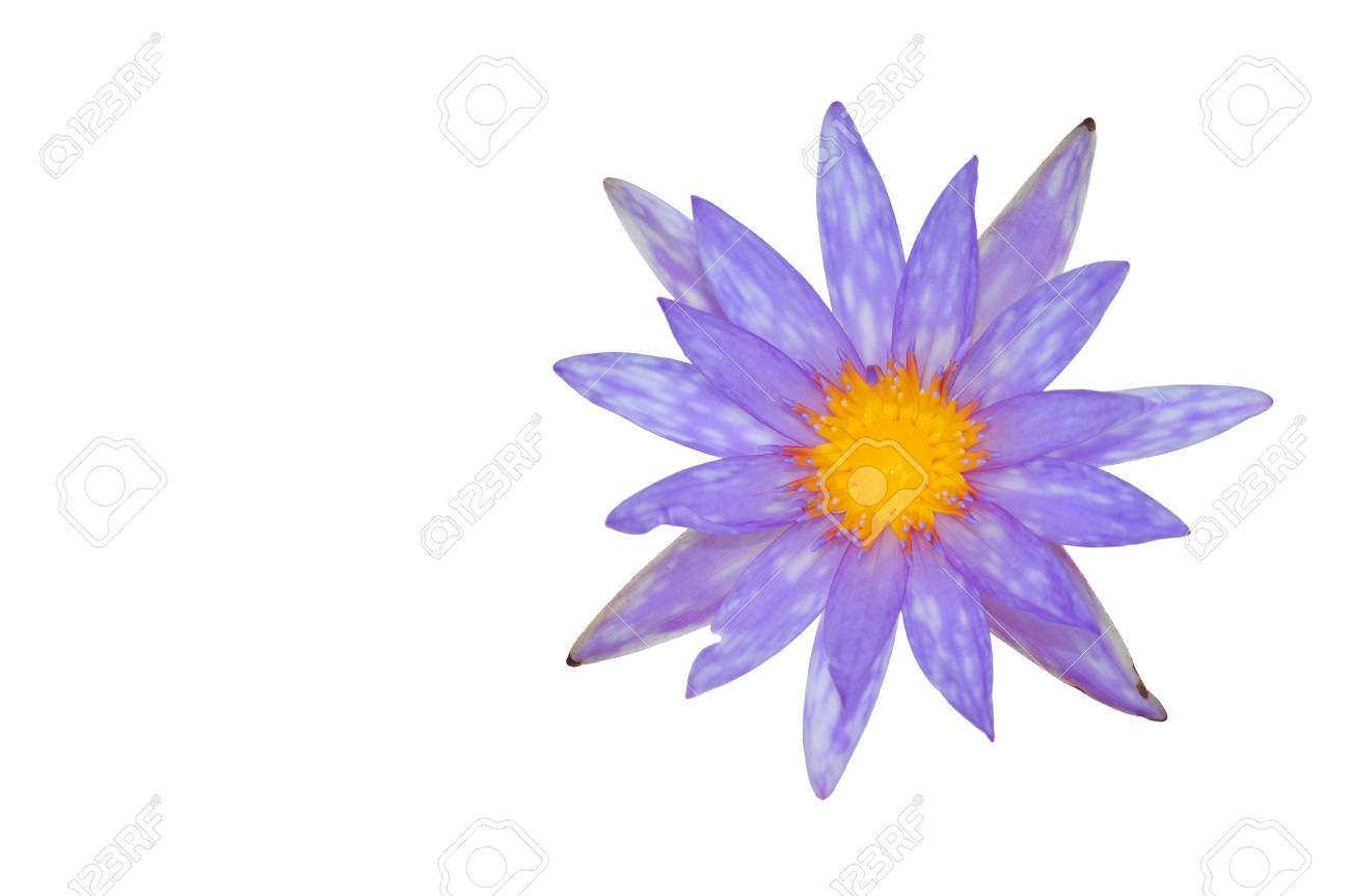 Lotus flower isolated on white background Stock Photo - 14030006