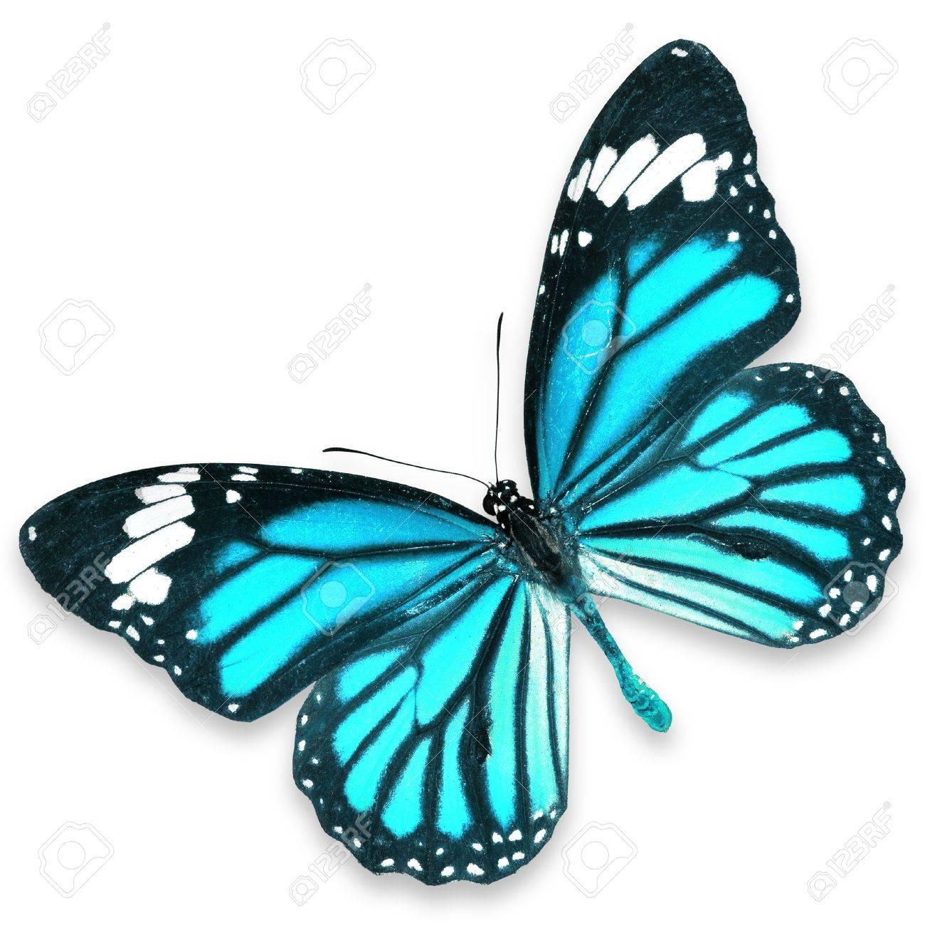 青い蝶飛ぶ白い背景で隔離 の写...