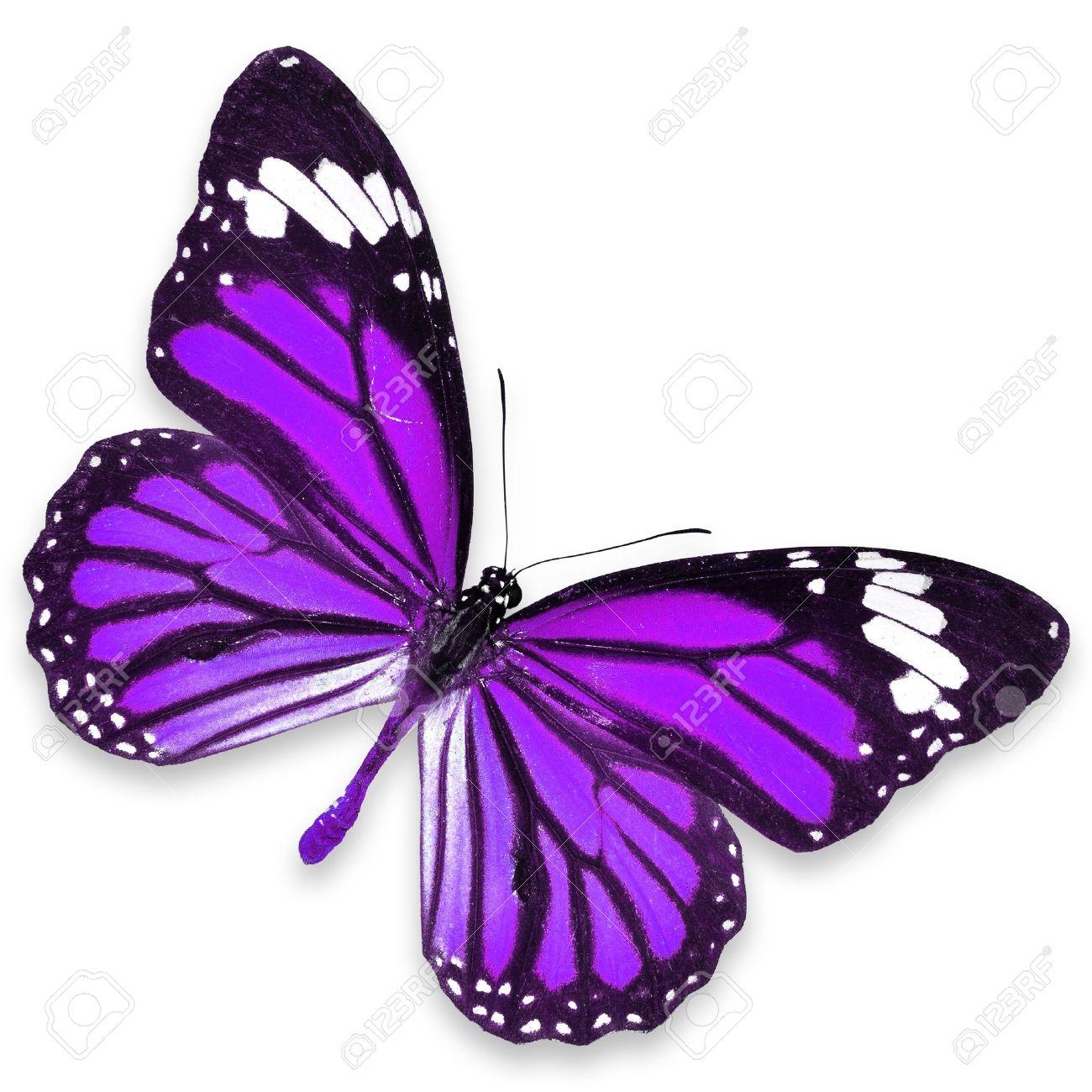 Purple butterfly cartoon