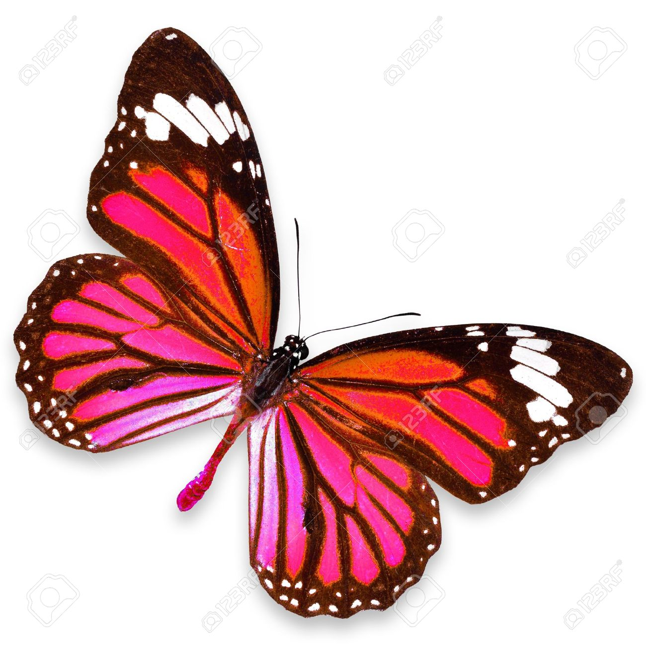 pink butterfly stock photos royalty free pink butterfly images