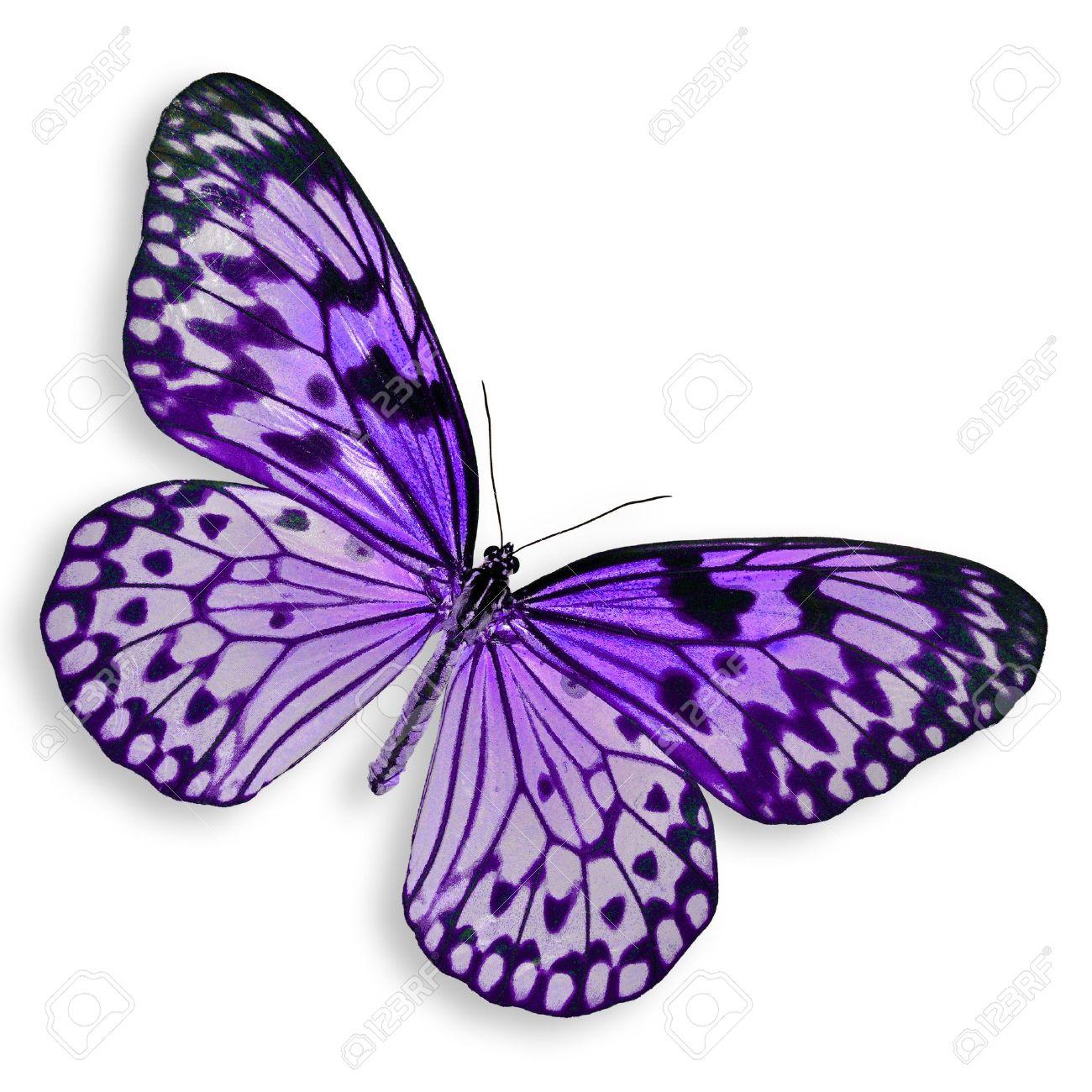 Purple butterfly flying