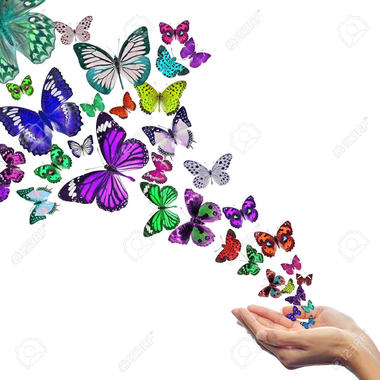 hand releasing butterflies images u0026 stock pictures royalty free