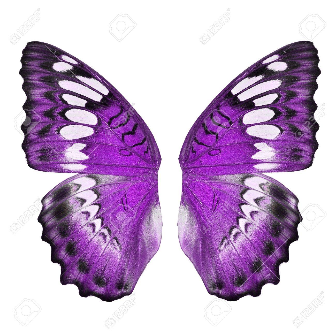 Aile De Papillon aile de papillon pourpre isolé sur fond blanc banque d'images et