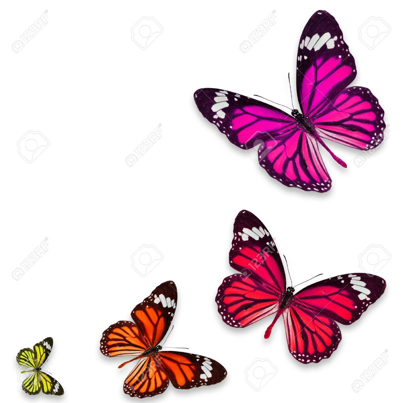Colorful Butterfly Isolated On White Background Stock Photo, Picture ...