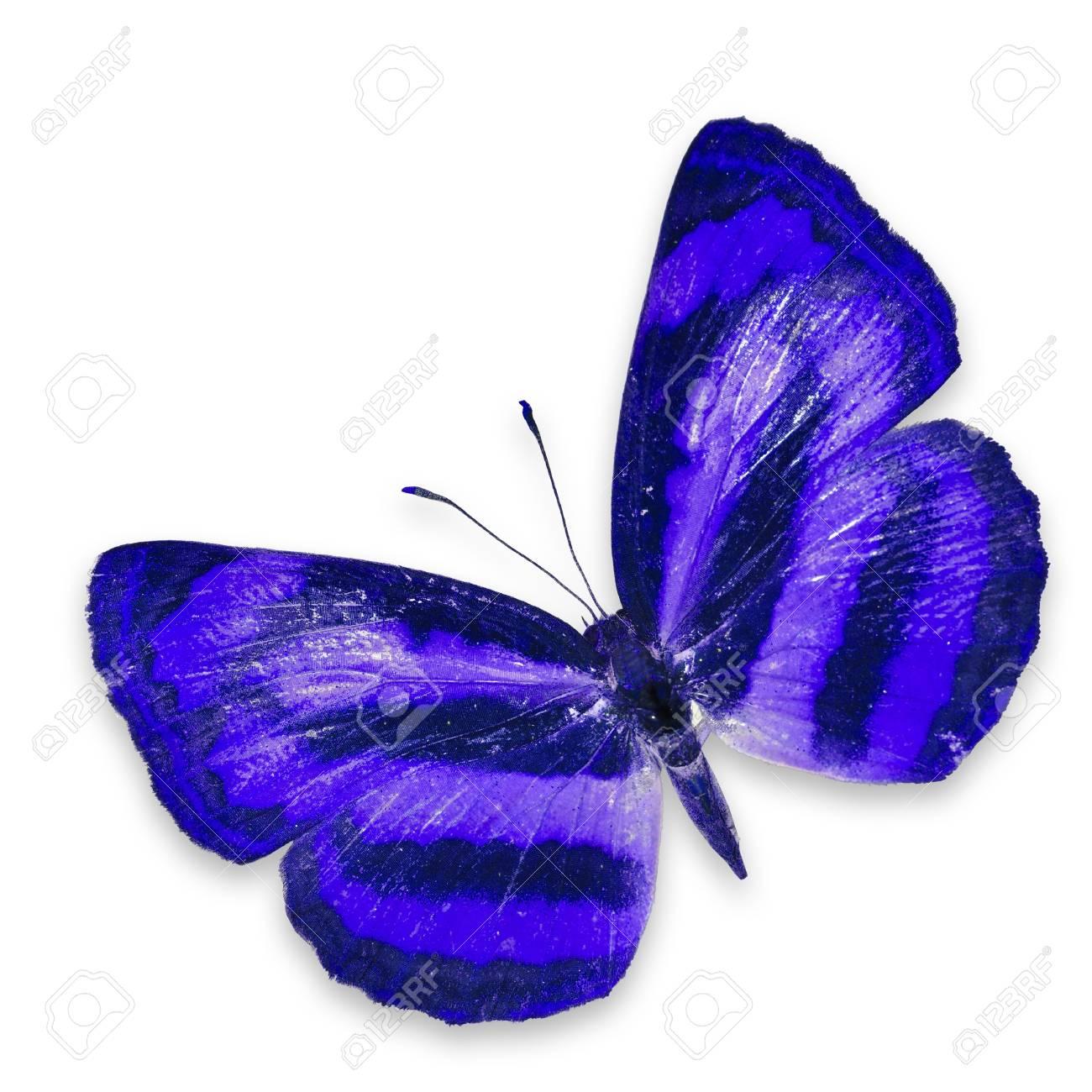 Immagini Stock Farfalla Blu Isolato Su Sfondo Bianco Image 17233517