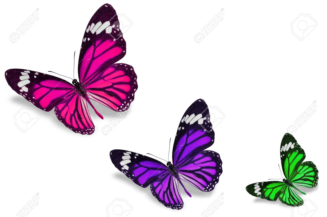 Colorful Butterflies Stock Photo Picture And Royalty Free Image