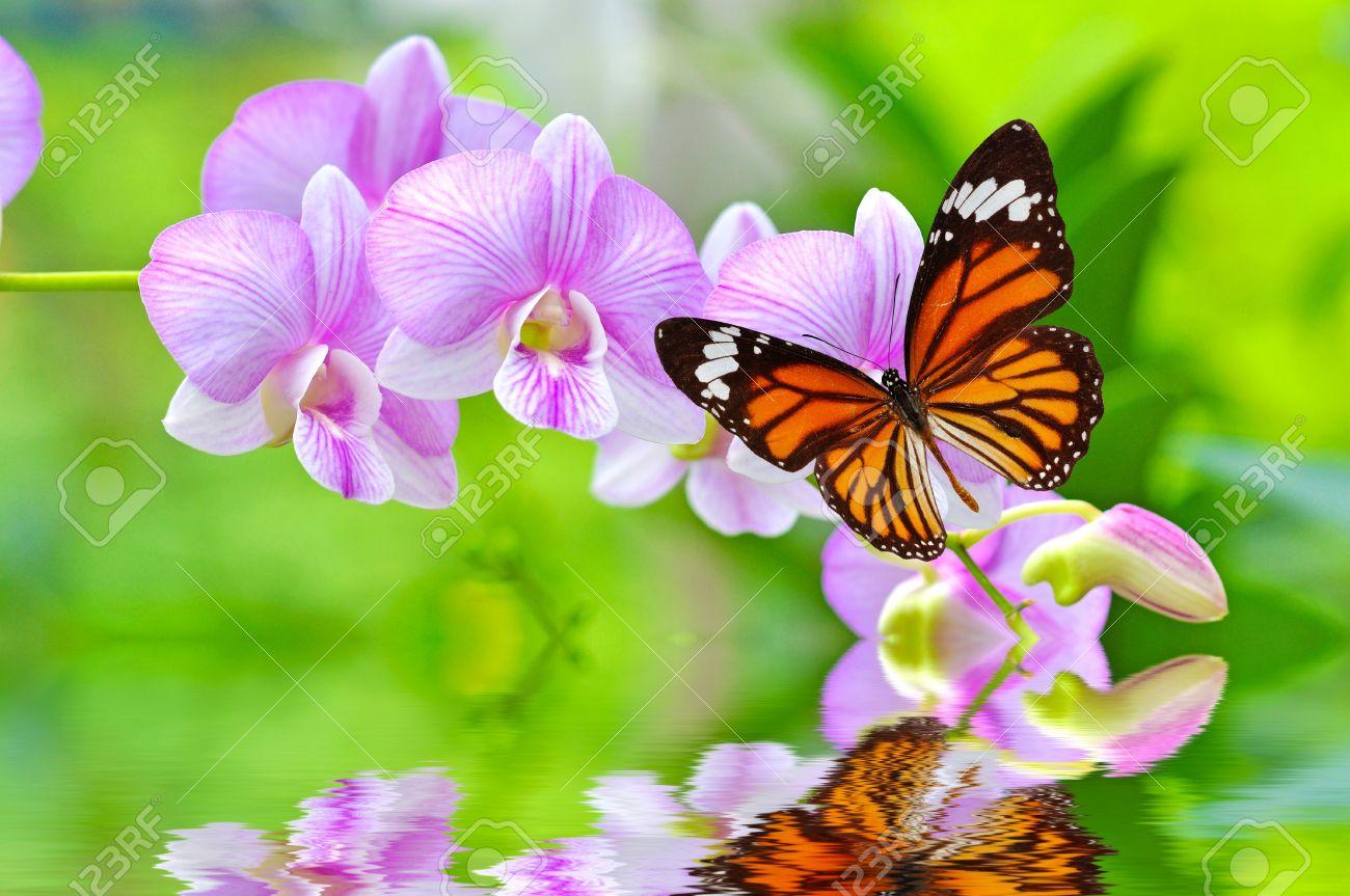 Resultado de imagen para mariposa flores