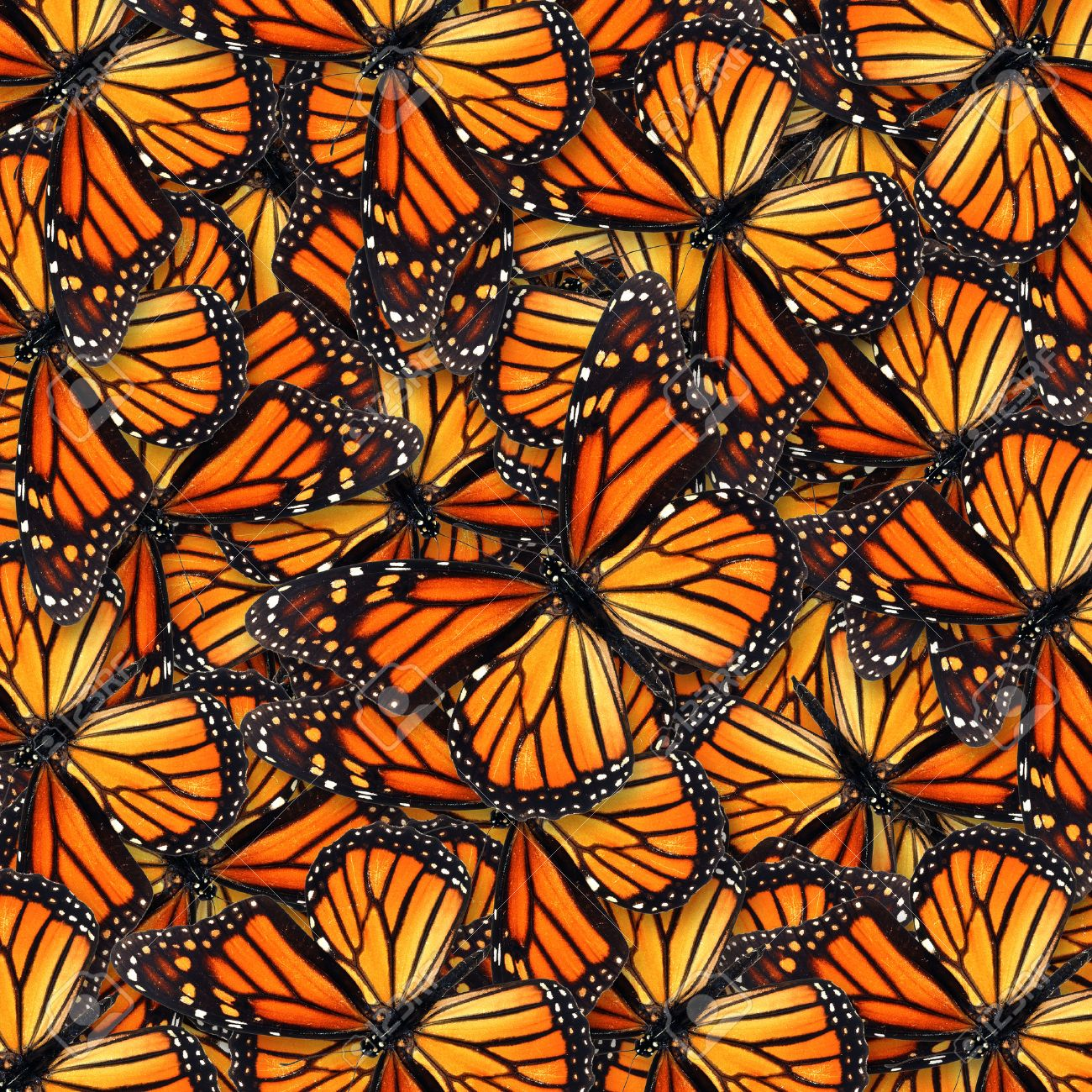 Beautiful monarch butterfly for background or texture - 33317635