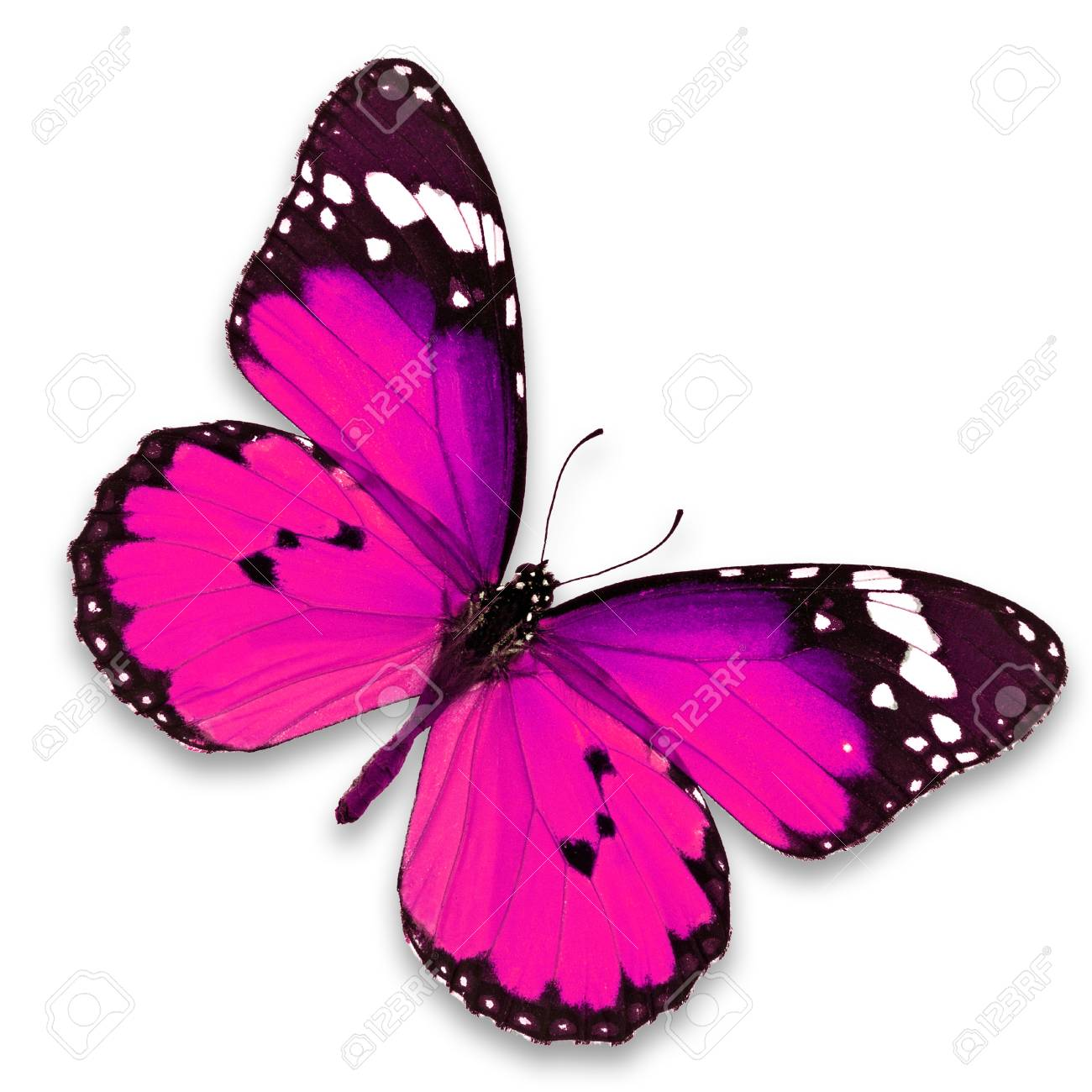Beautiful pink butterfly isolated on white background - 33647254
