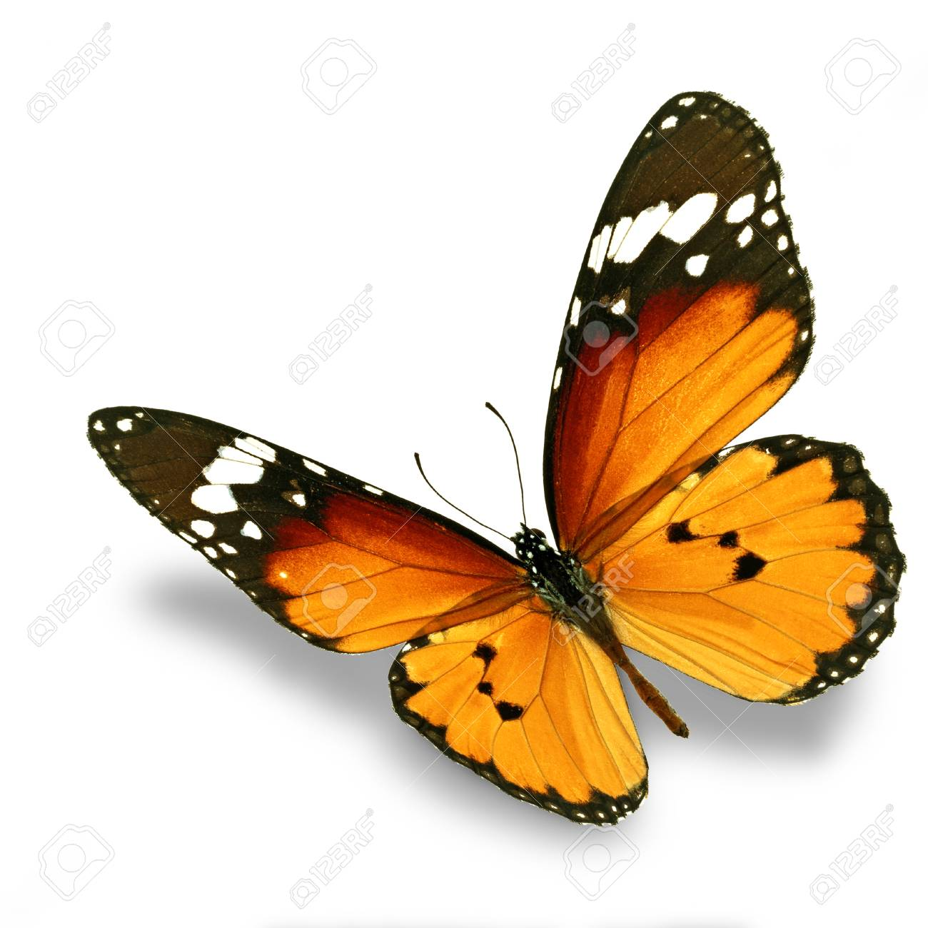 Beautiful orange butterfly flying isolated on white background - 33943629