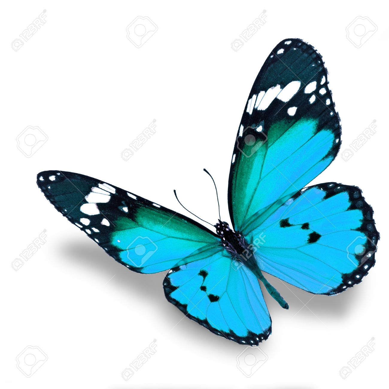 Beautiful blue butterfly flying isolated on white background - 33943823