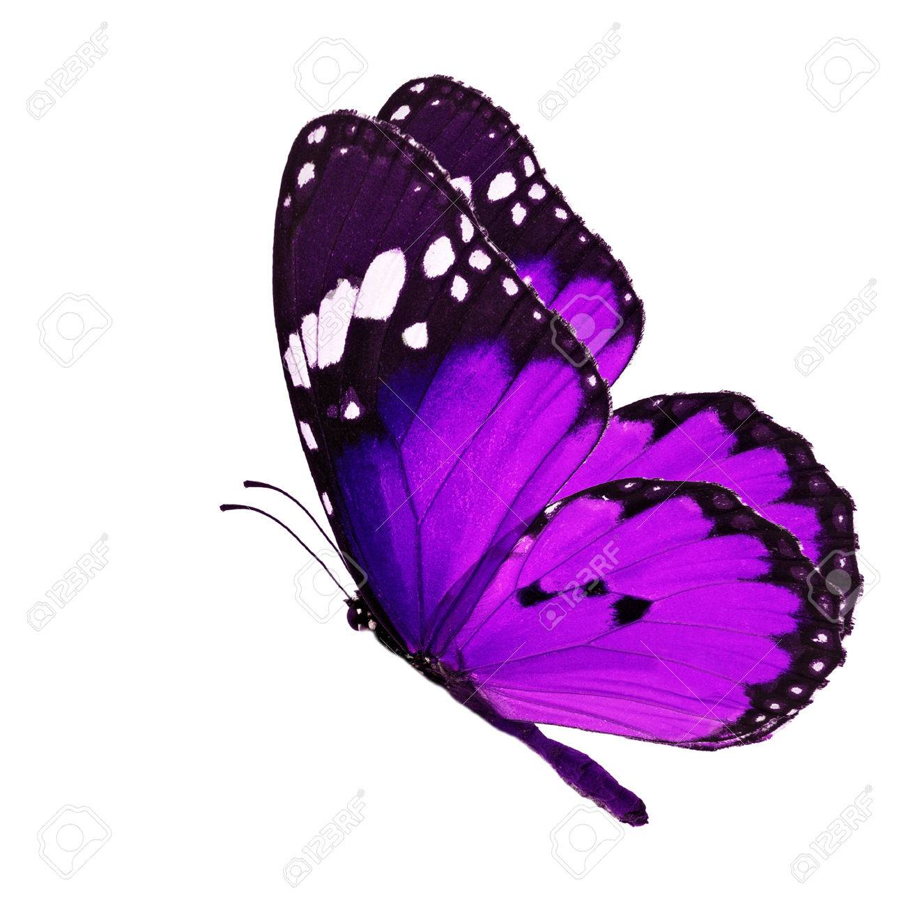 Beautiful purple butterfly flying isolated on white background - 34559017