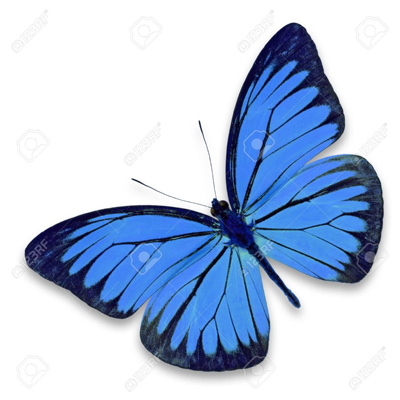 Immagini Stock Bella Farfalla Blu Isolato Su Sfondo Bianco Image