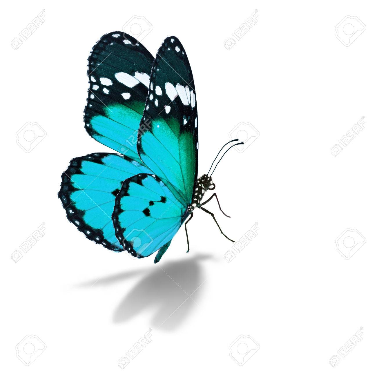 Beautiful colorful butterfly isolated on white background. - 49555062