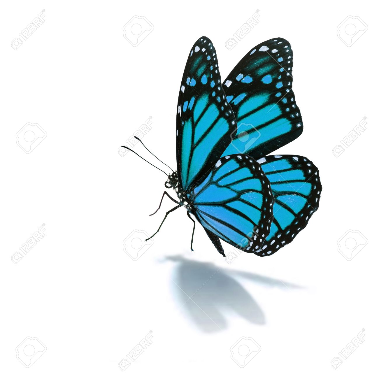 Beautiful blue butterfly isolated on white background - 38168915