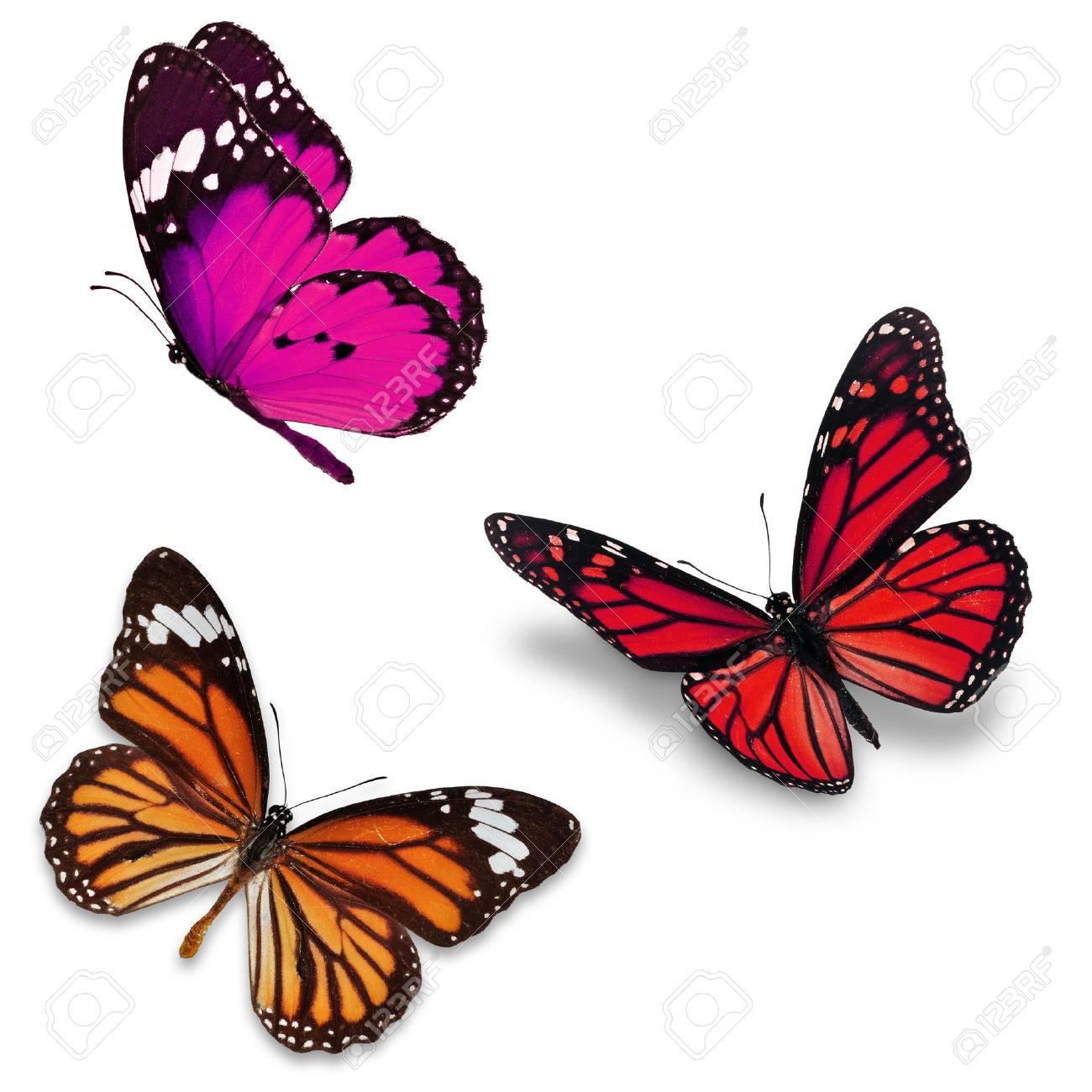 Three colorful butterfly, isolated on white background - 39084911