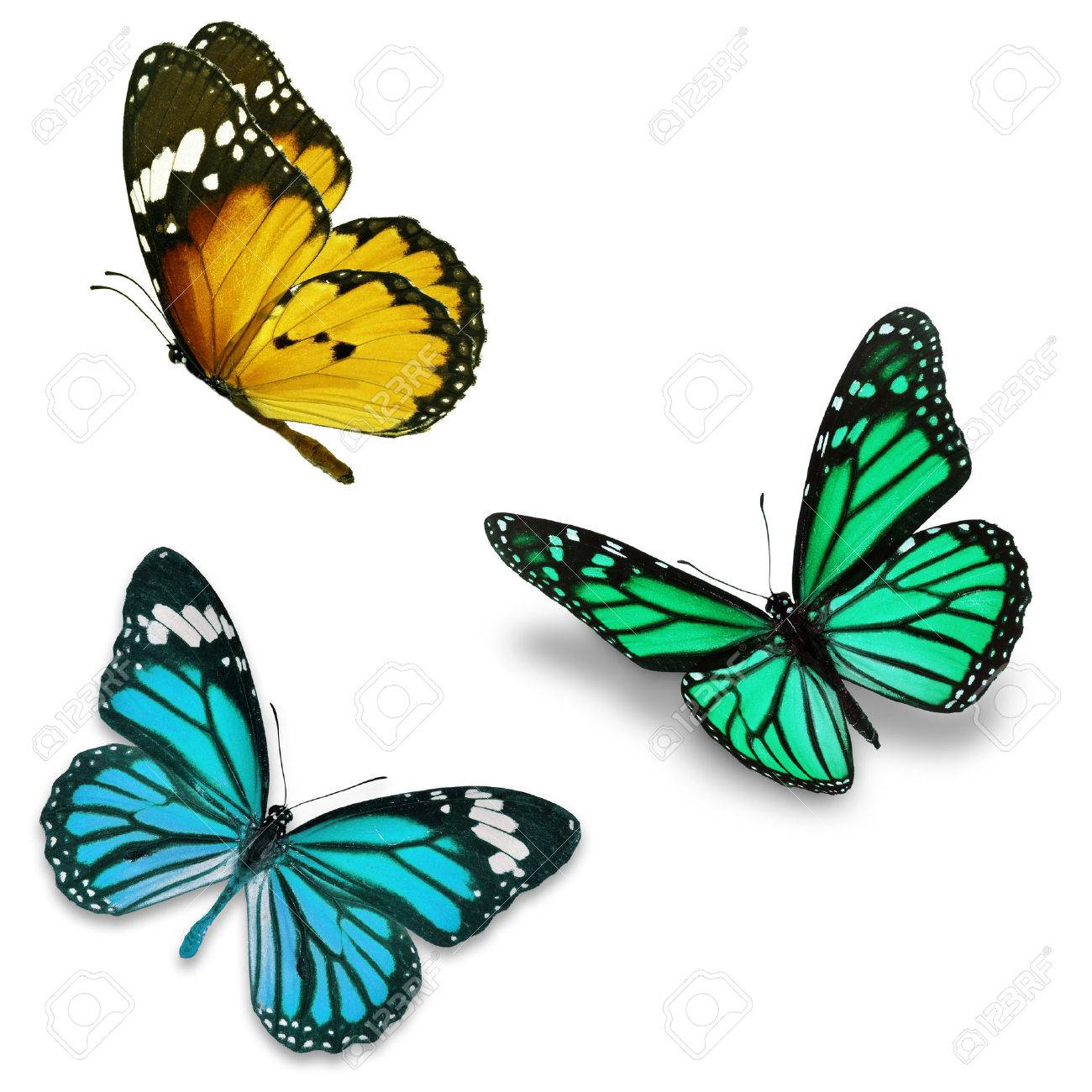 Three colorful butterfly, isolated on white background - 39084920