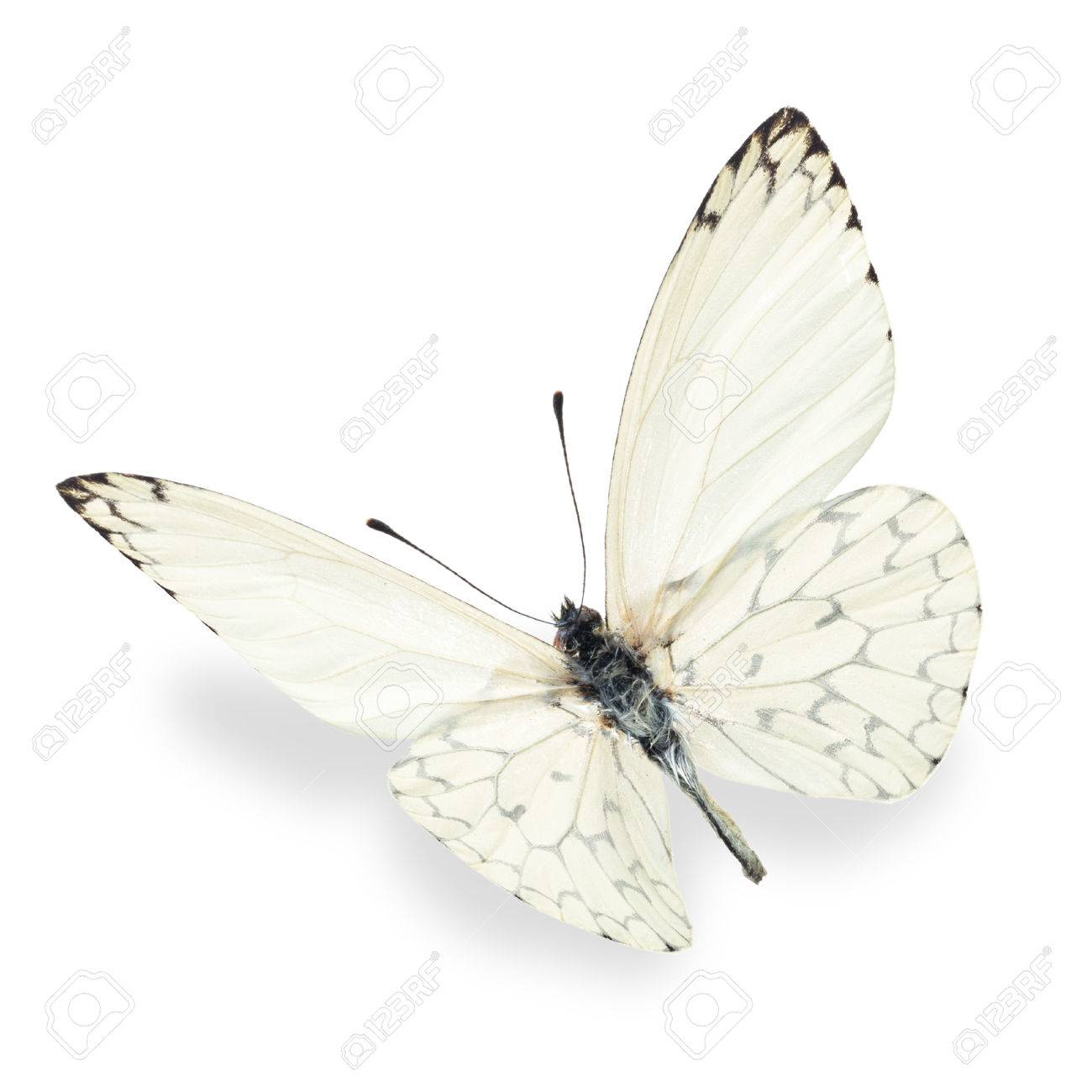Beautiful white butterfly, isolated on white background - 40371992