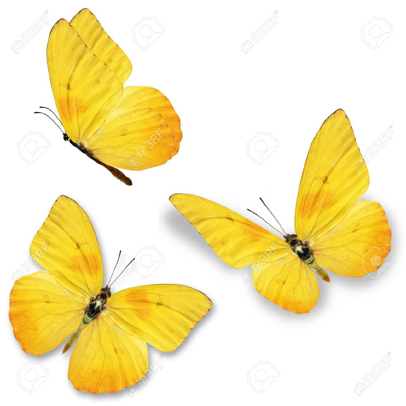 Three yellow butterfly, isolated on white background - 40372304