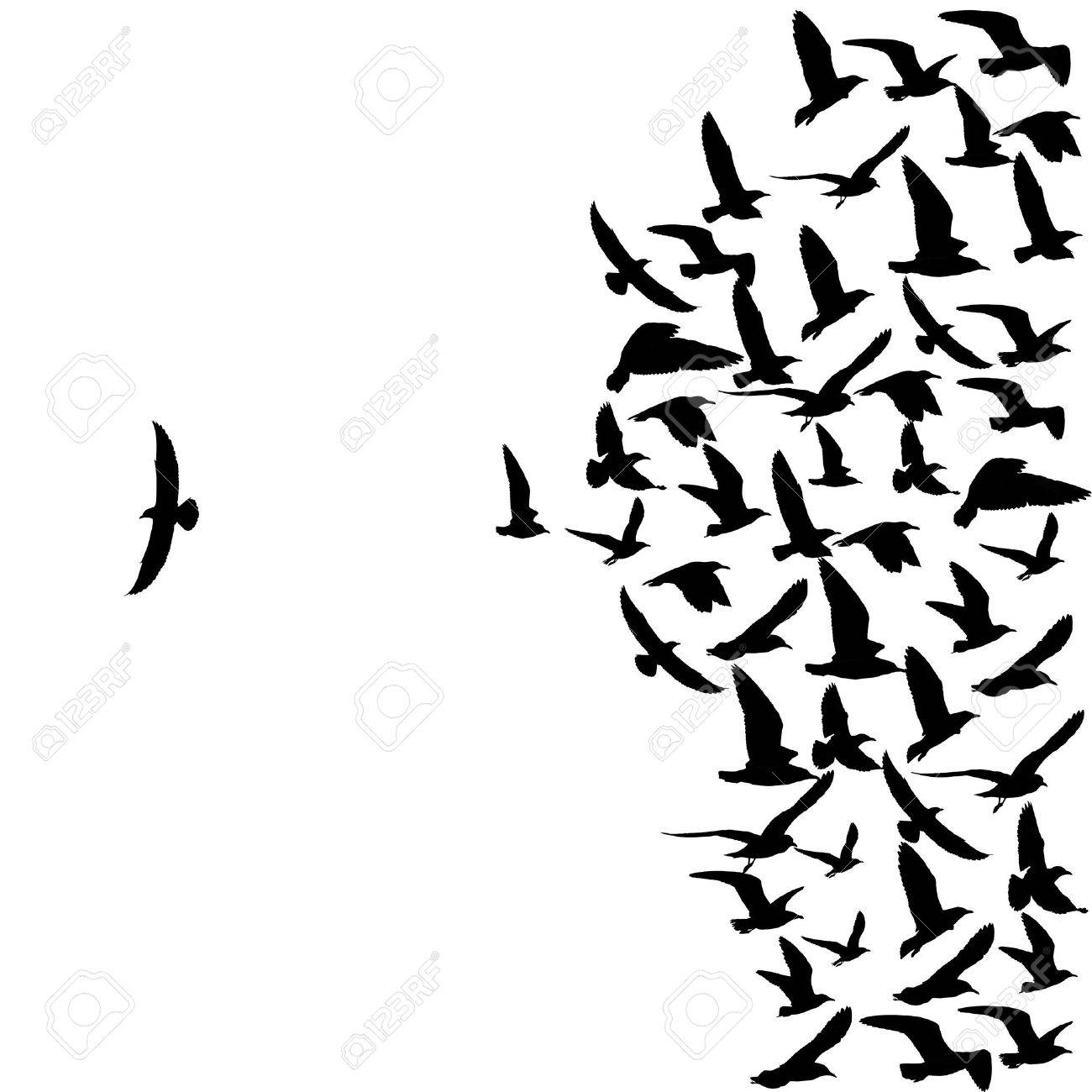 silhouette group of flying seagull birds with one individual bird going in the opposite direction white background. - 44867123