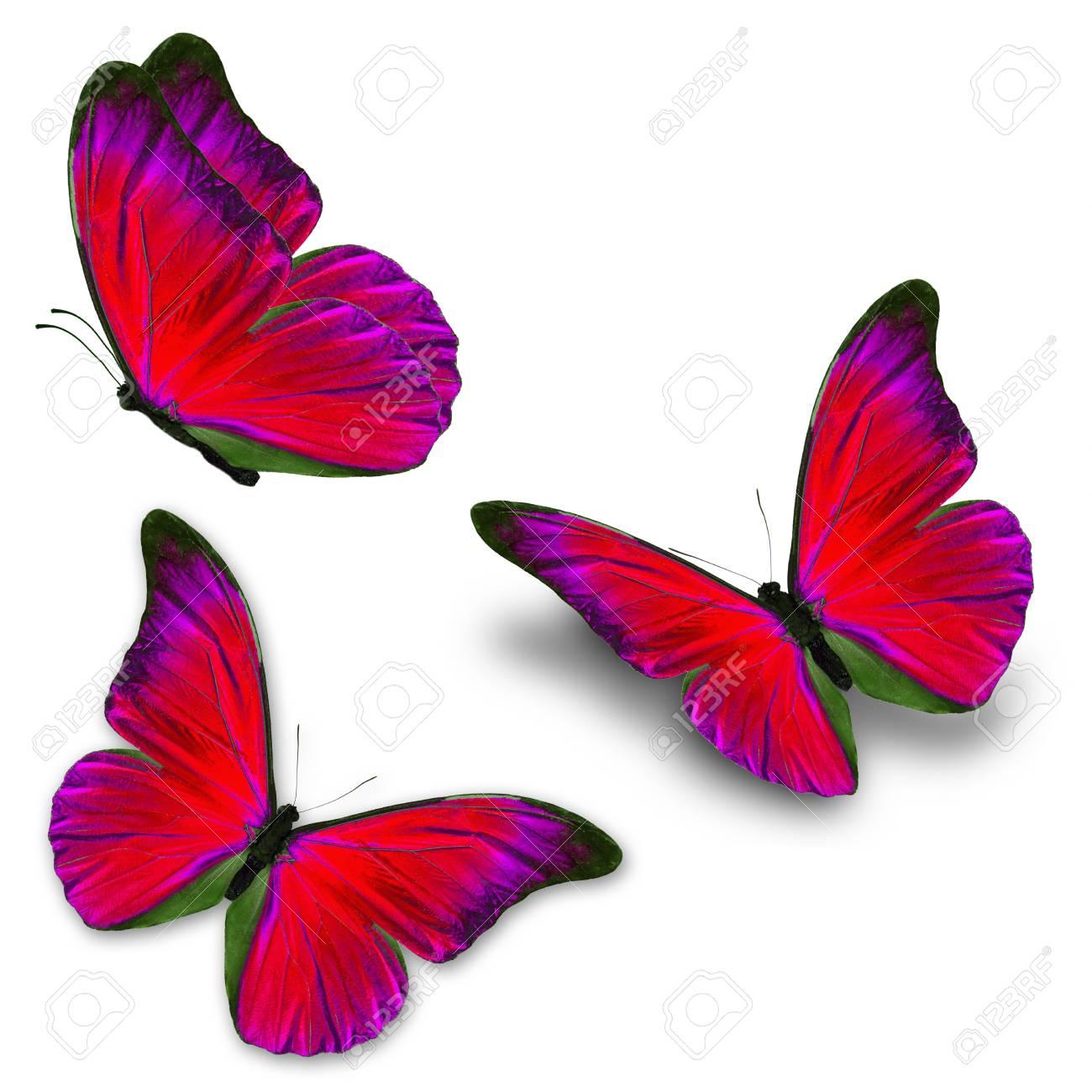 Immagini Stock Bella Tre Farfalla Blu Volare Isolato Su Sfondo