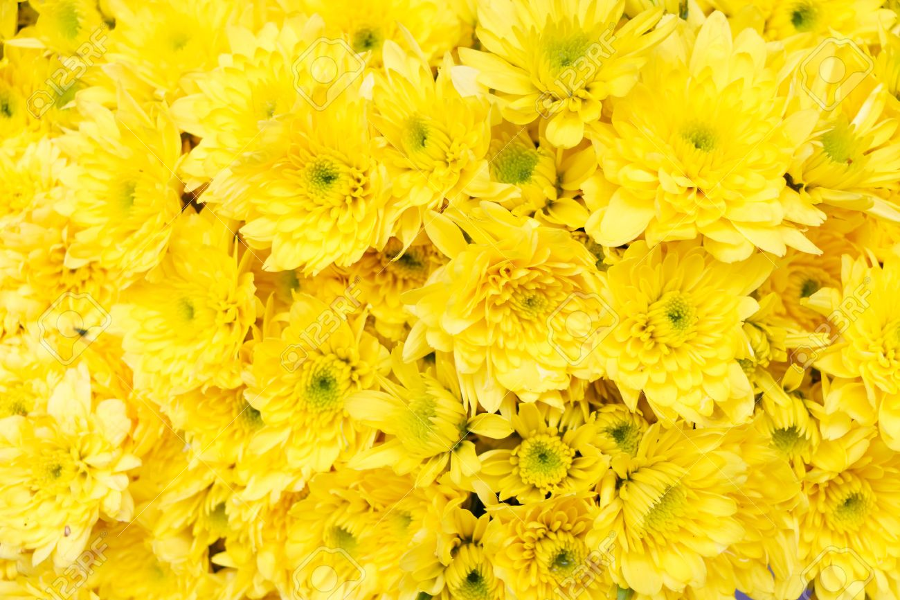 Yellow Flower Background Stock Photo Picture And Royalty Free