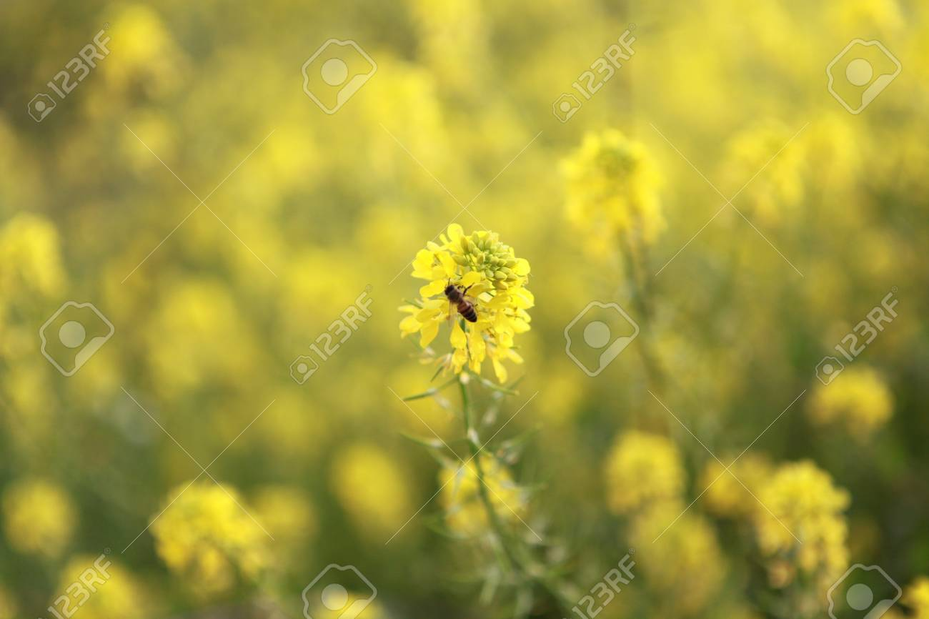 Yellow And Green Flowers With Bee Animal Stock Photo Picture And