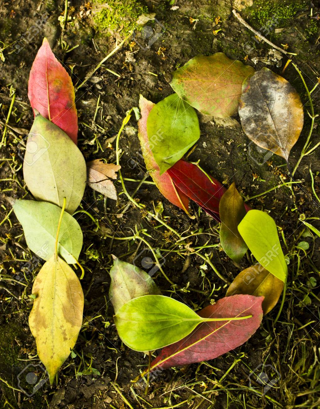 Is in Leafs Stock Photo - 13846971