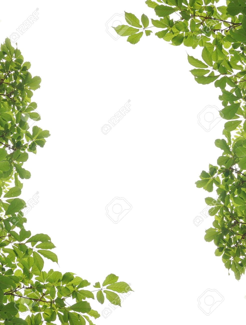 green leaf picture frame stock photo 13963882