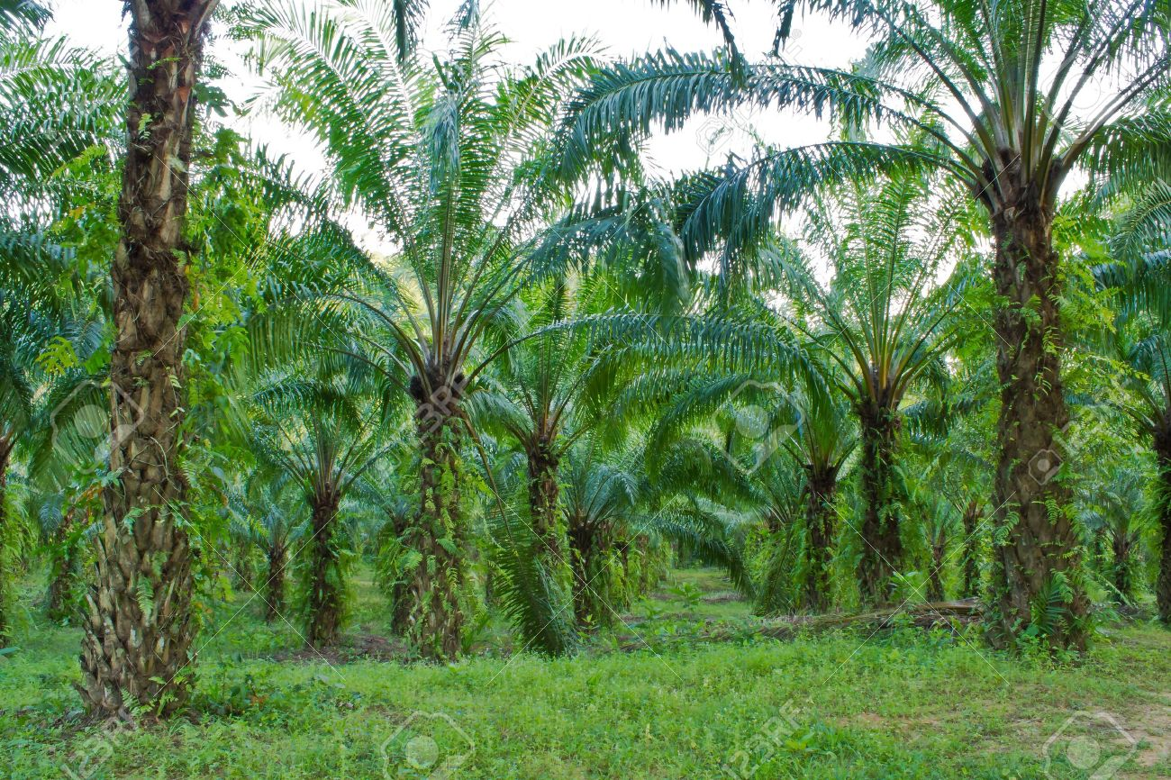 palm garden Stock Photo - 12163832